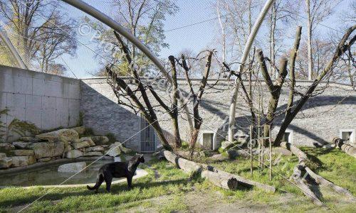 krakow-zoo-pawilon-kotow_06_D_5D3_2411