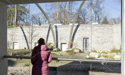 krakow-zoo-pawilon-kotow_08_D_5D3_2498
