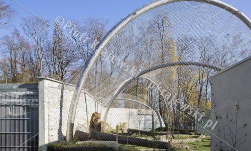 krakow-zoo-pawilon-kotow_13_D_5D3_2452