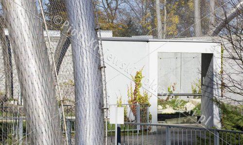 krakow-zoo-pawilon-kotow_16_D_5D3_2487