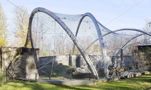 krakow-zoo-pawilon-kotow_18_D_5D3_2432