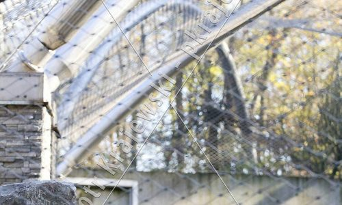 krakow-zoo-pawilon-kotow_19_D_5D3_2475