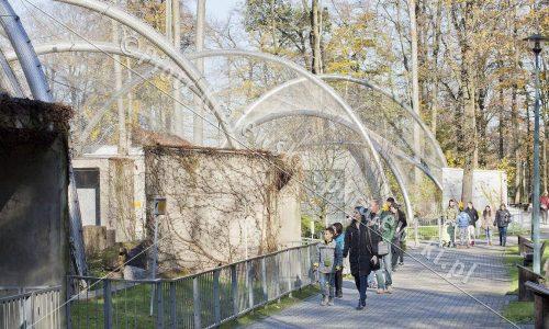 krakow-zoo-pawilon-kotow_20_D_5D3_2485